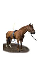 Equine Equine Legcooler