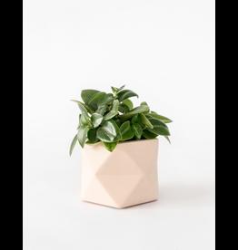 Plantenpot Palua Medium Pink