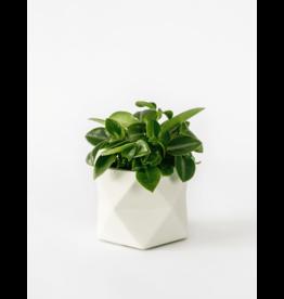 Plantenpot Palua Medium Green
