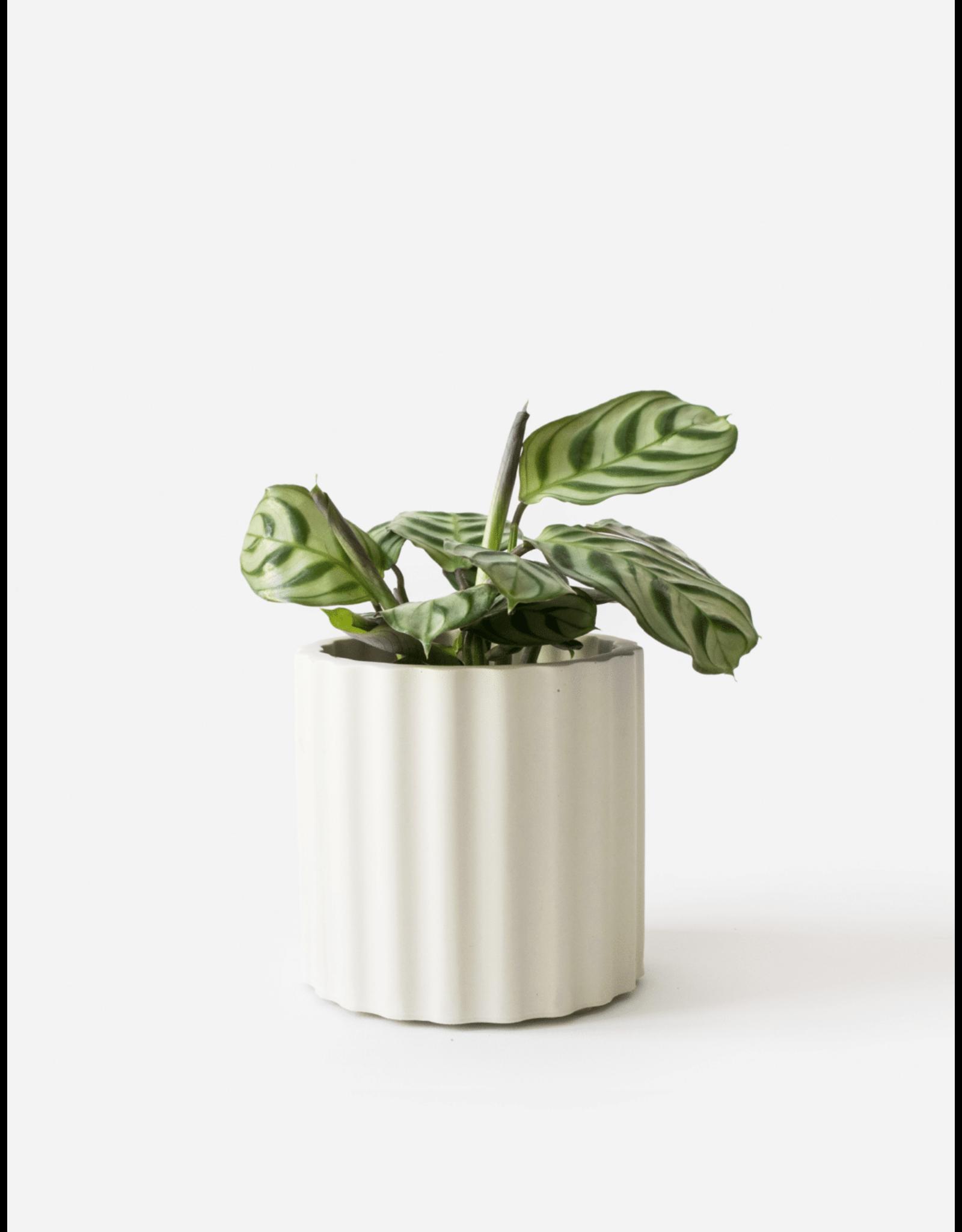 Plantenpot Mila Silver green