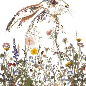 Wildflower Hare Card