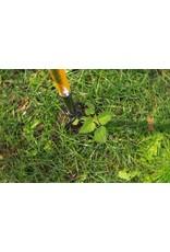 Tornadica Tornadica Weed Extractor