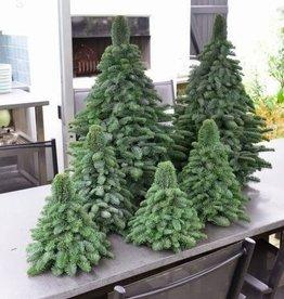Gebonden kerstboompjes
