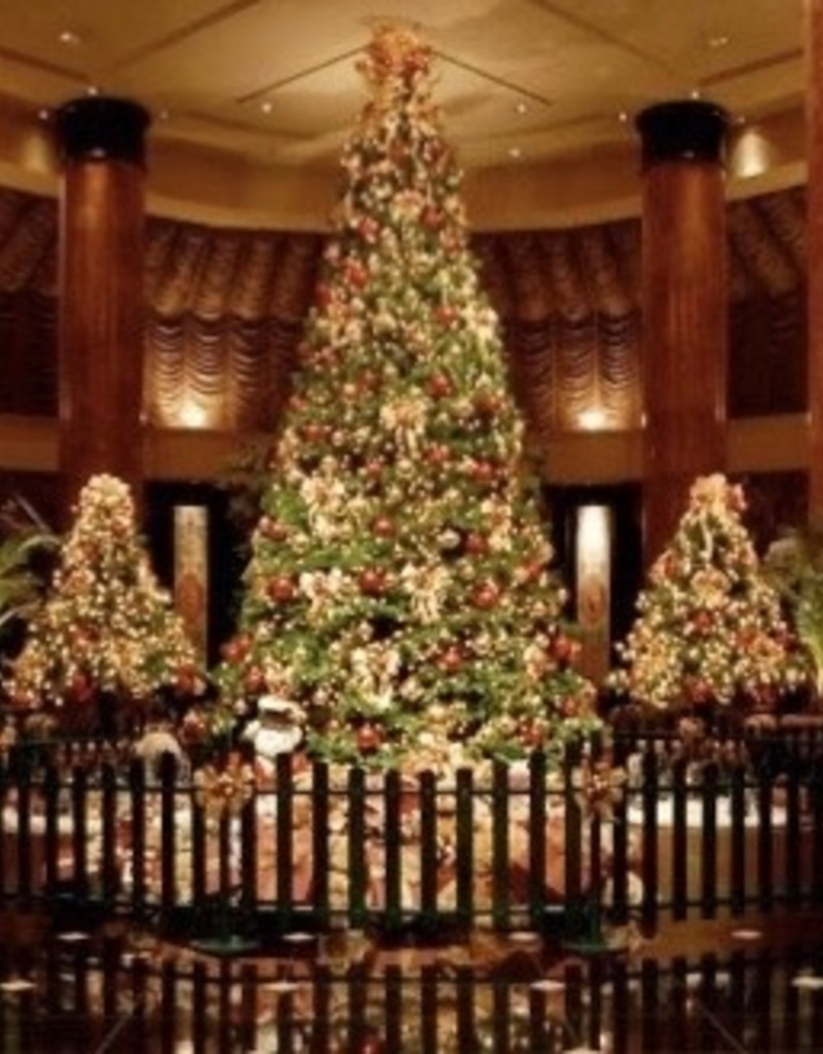 kerstboom 5 meter Kerstboom huren 450 meter