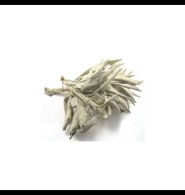 Witte Salie Smudge à 12 cm