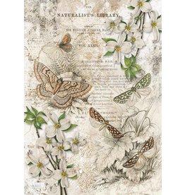 Decoupage Queen Naturalist Library
