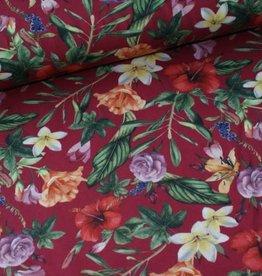 Megan Blue Red bloem
