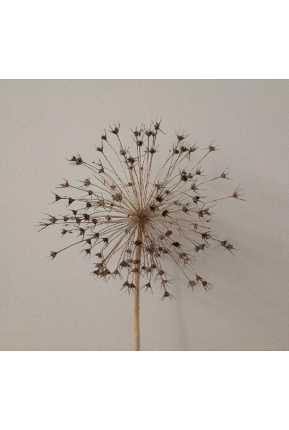 Allium Naturel