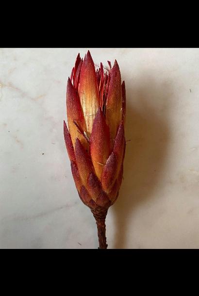 Flowerbar - Protea Rood