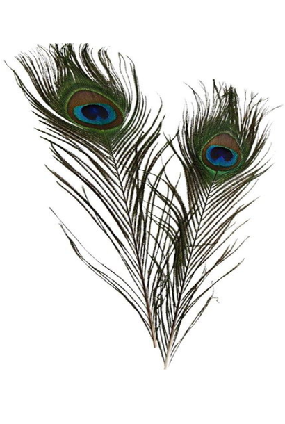 Peacock feather Natural