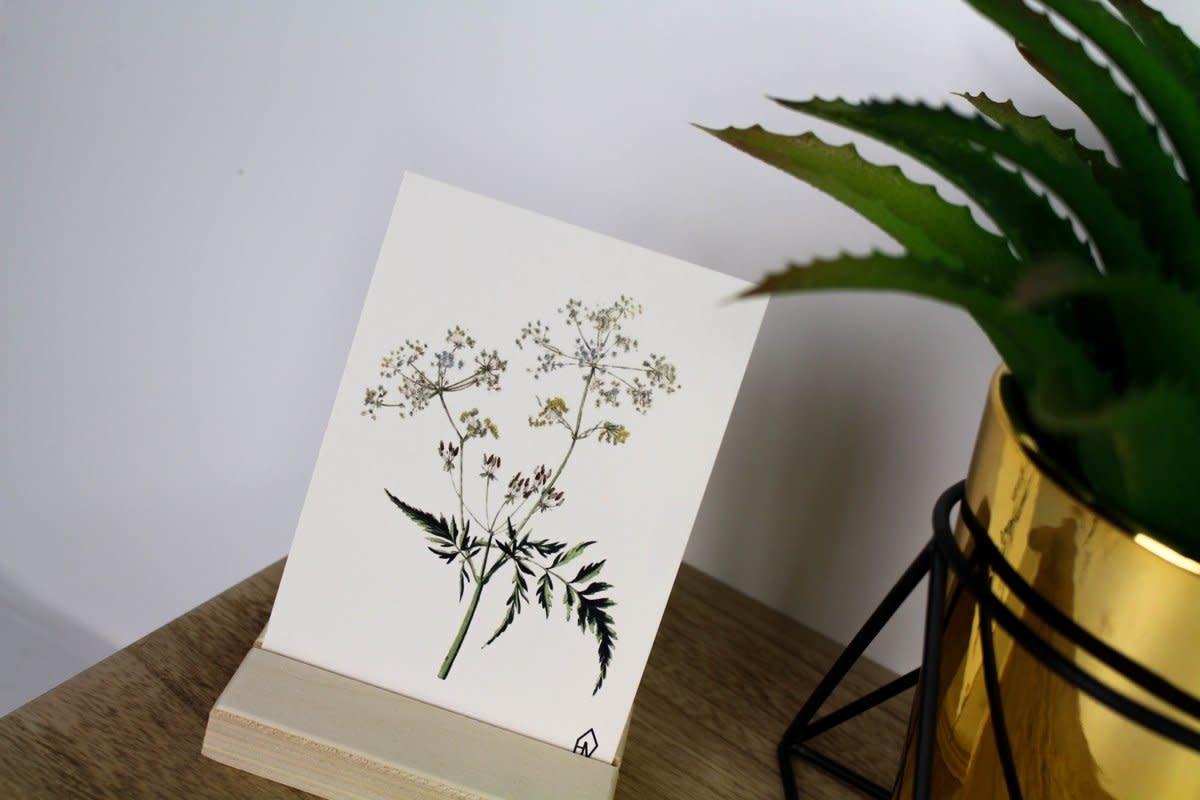 Postkaart Fluitenkruid-2