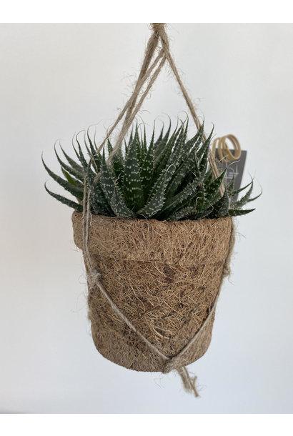Hangplant Mini - Vetplant