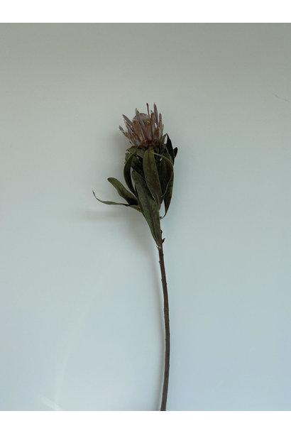Flowerbar - Protea Groot