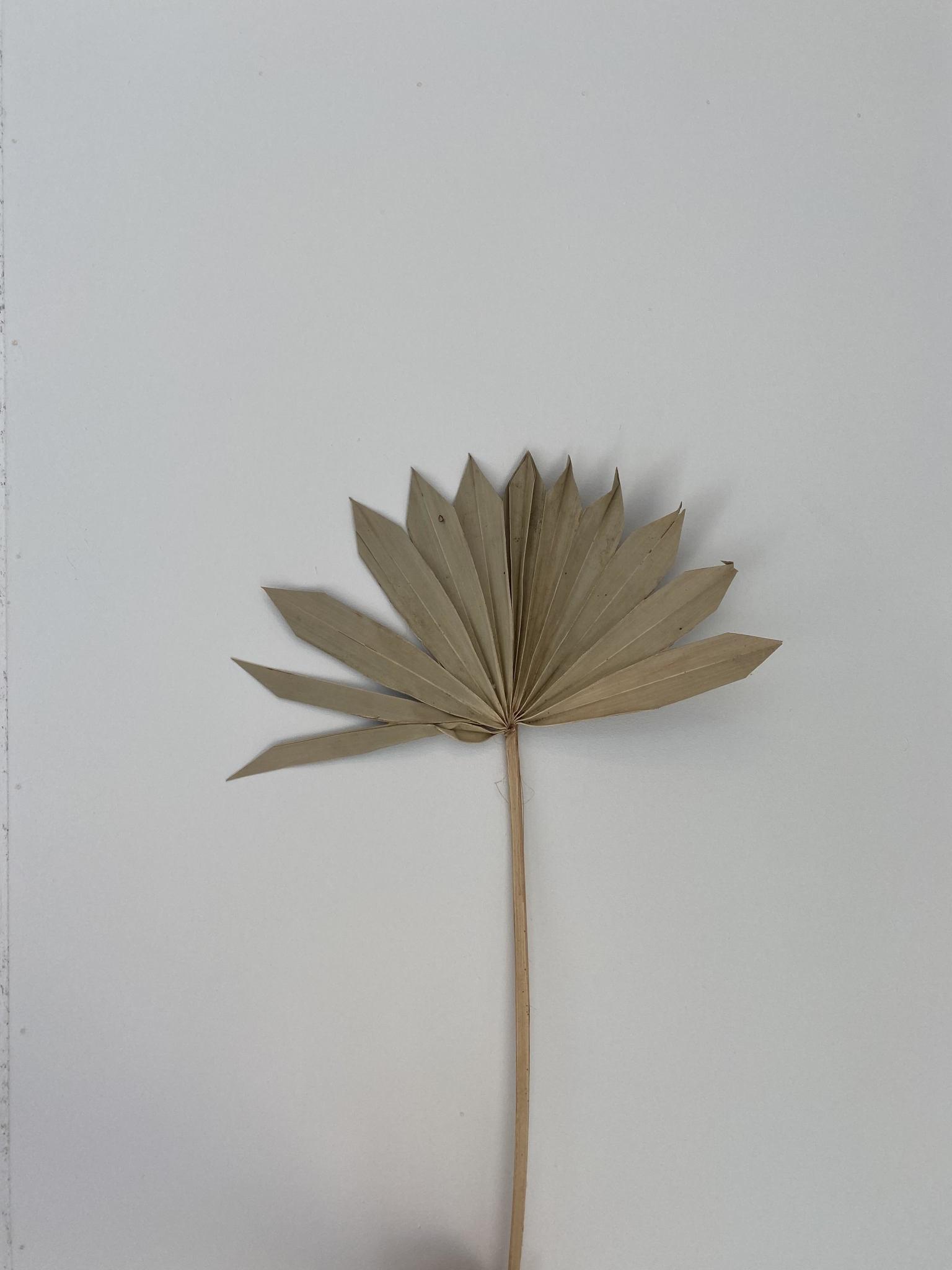 Palm Naturel-1