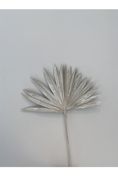 Palm Washed White