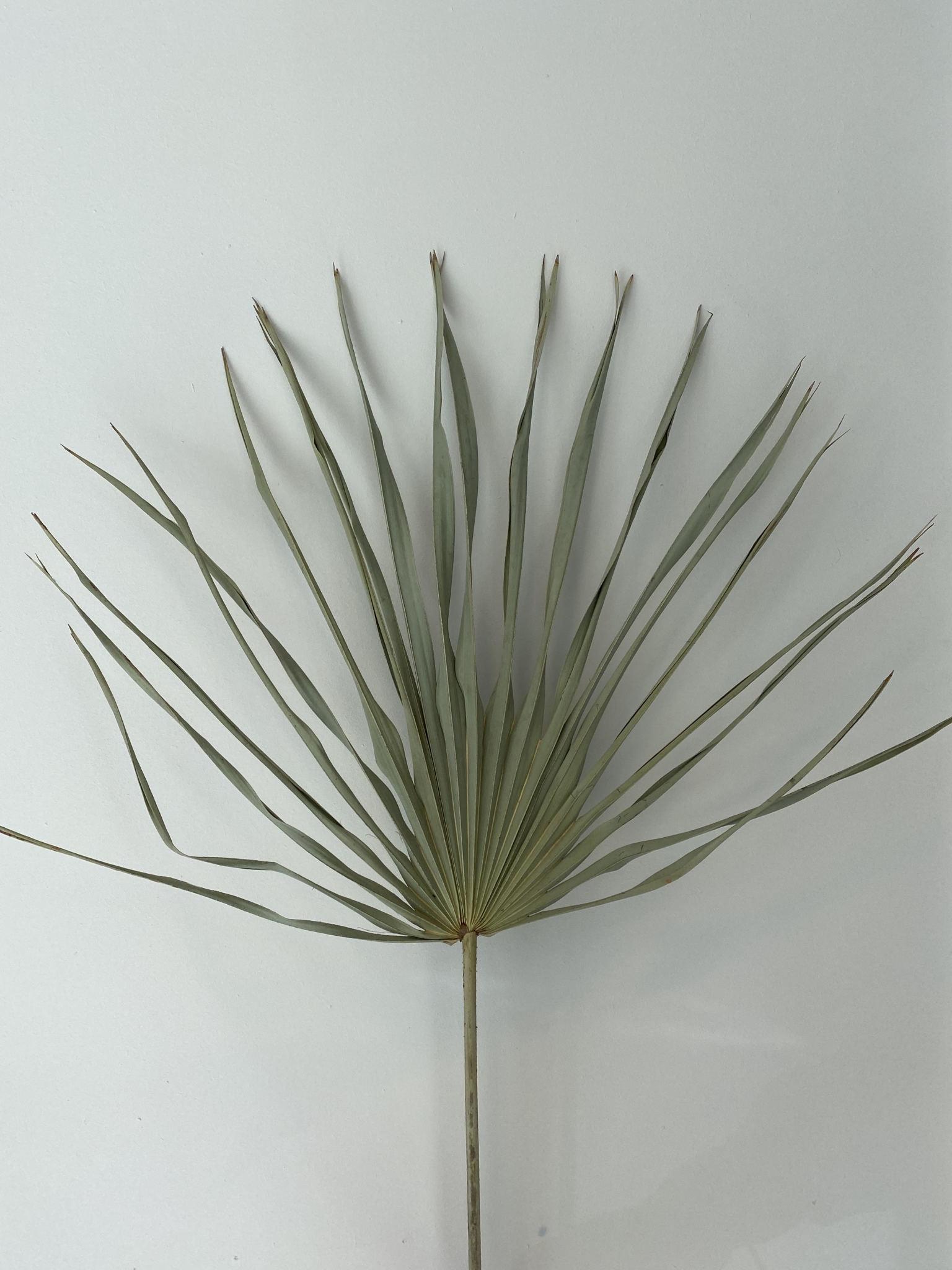Gedroogd Palmblad Naturel-2