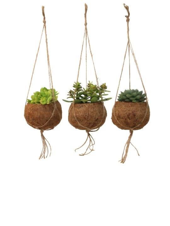 Hangplant Vetplant - Crassula Ovata Druce-3