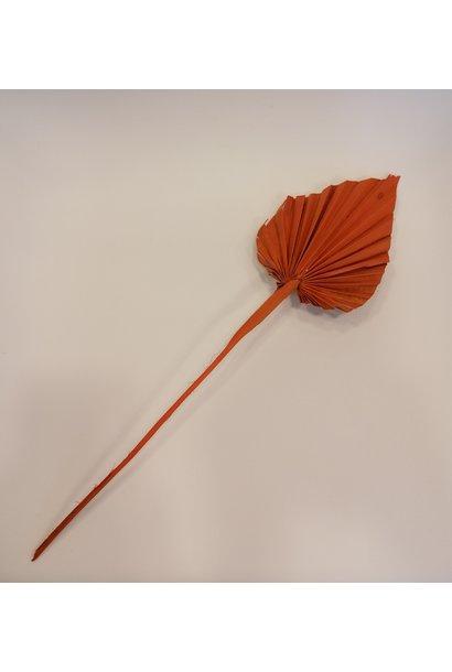 Palm Oranje Mini