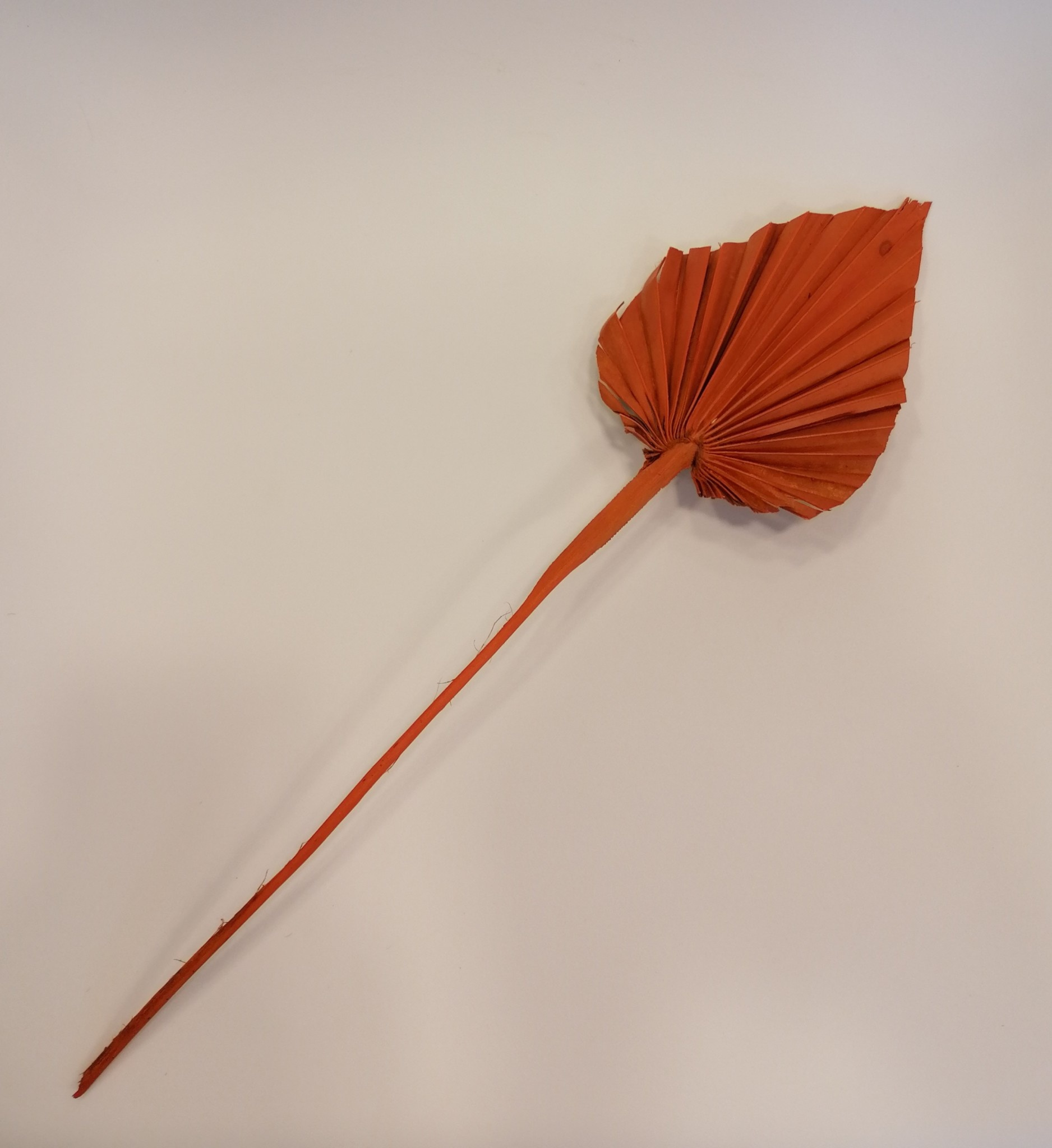 Palm Oranje Mini-1