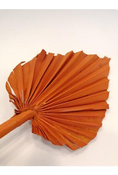 Palmspeer mini oranje