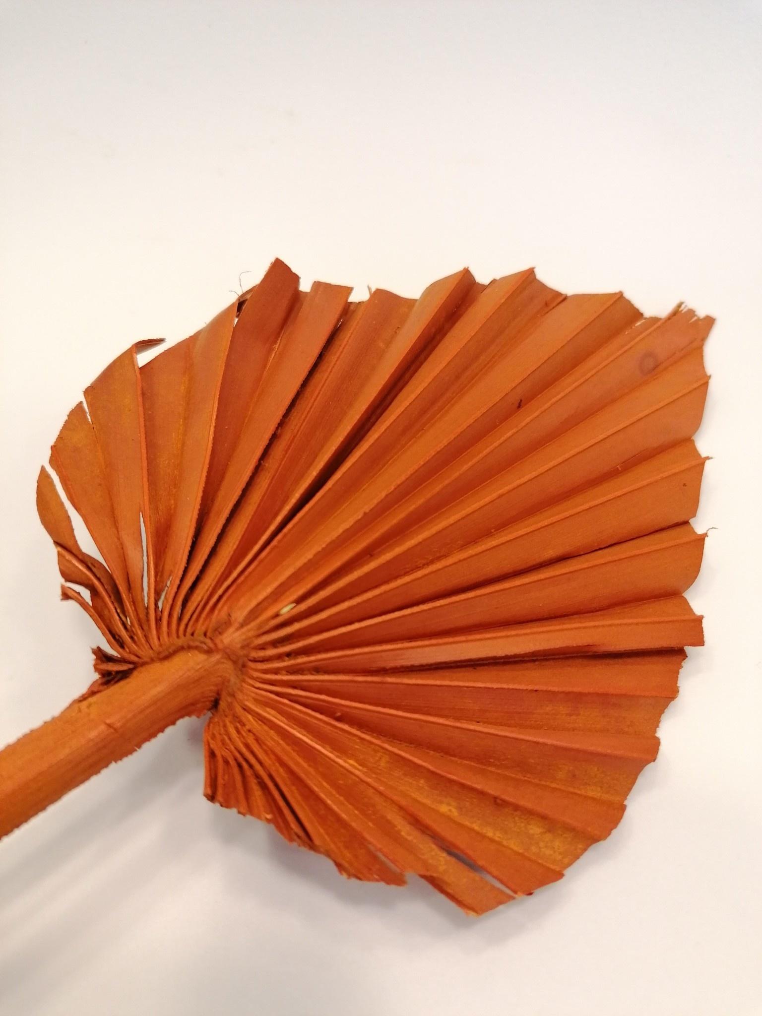Palm Oranje Mini-2