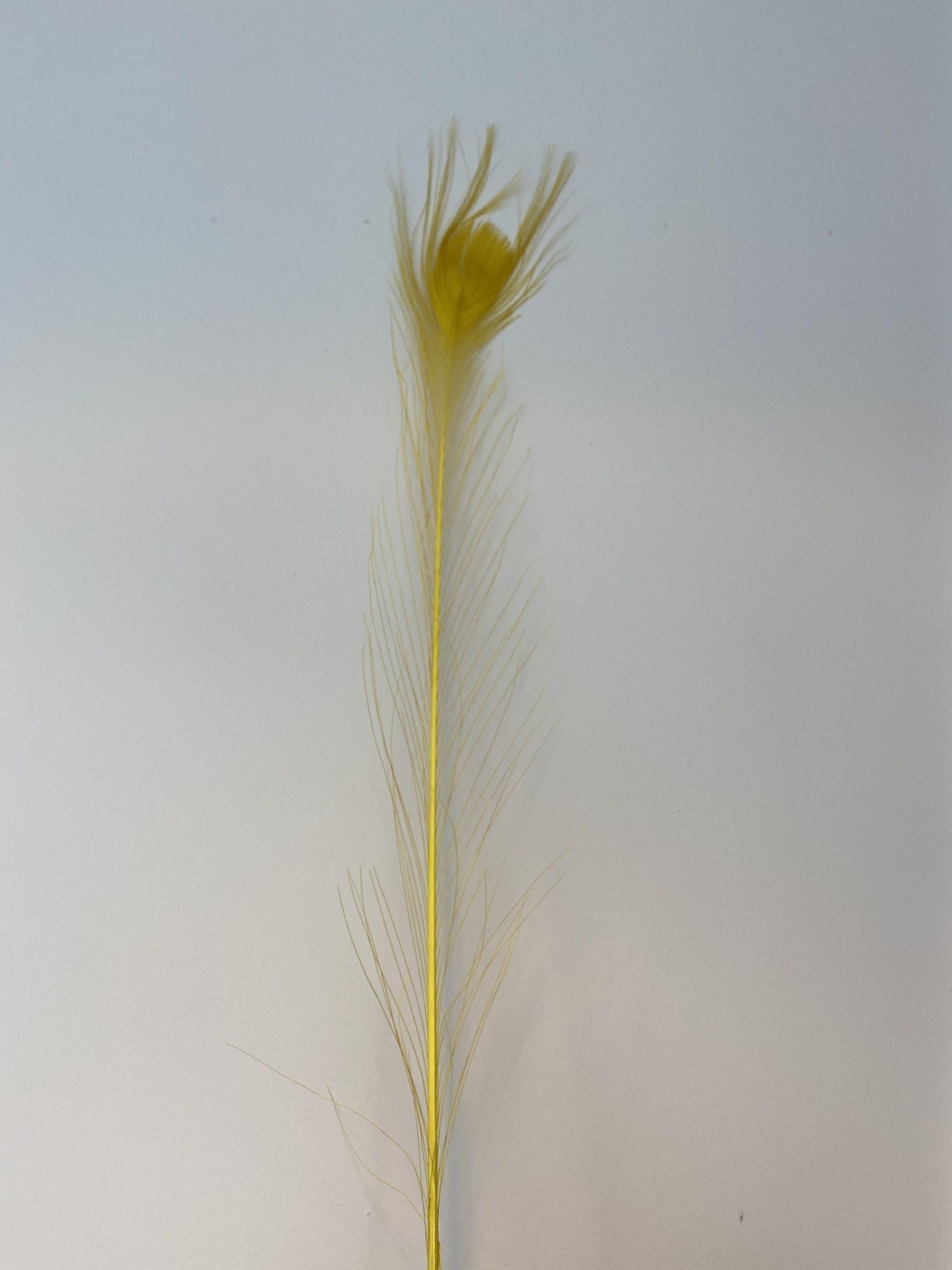 Pauwenveer Geel-1