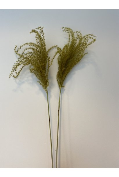 Miscantus Limoengroen