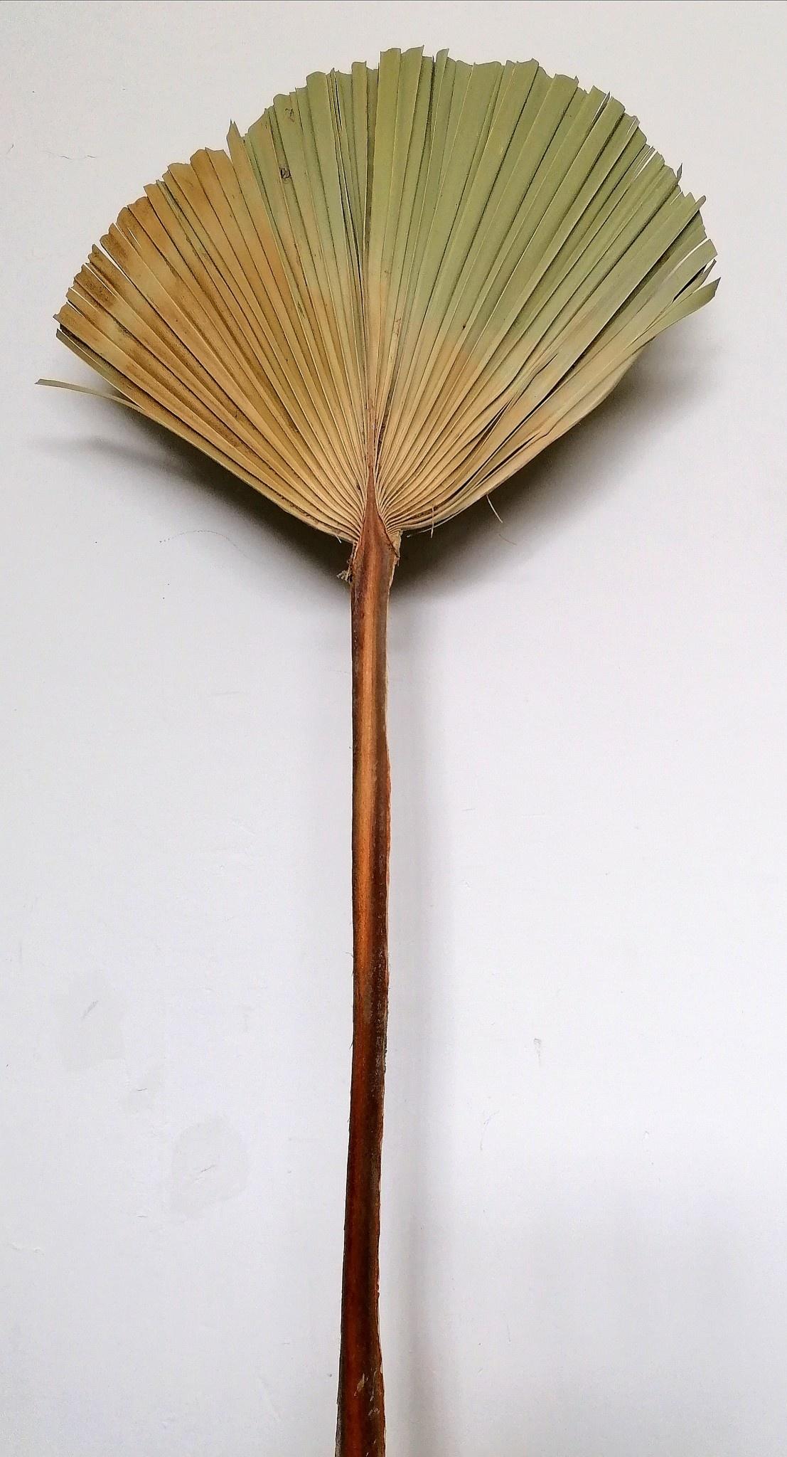 Gedroogd Palmblad Groot-1