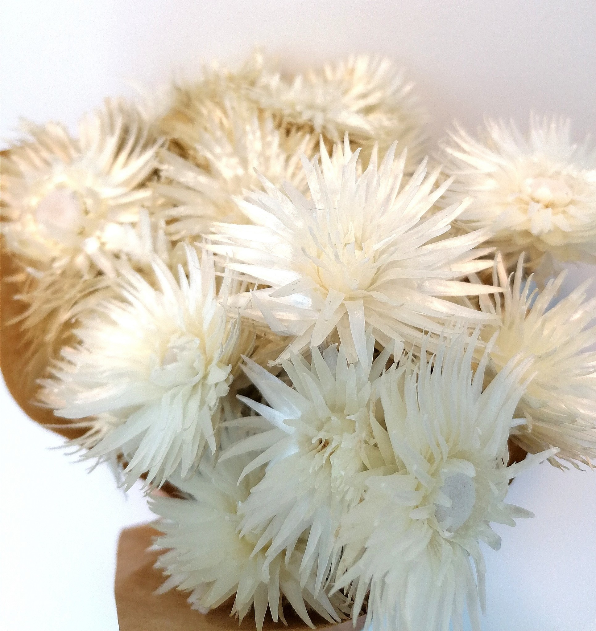 Droogboeket Kaapse Bloemen Wit-2