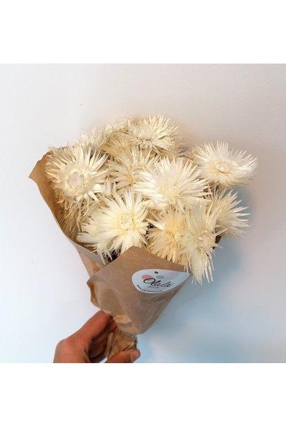 Droogboeket Kaapse Bloemen Wit