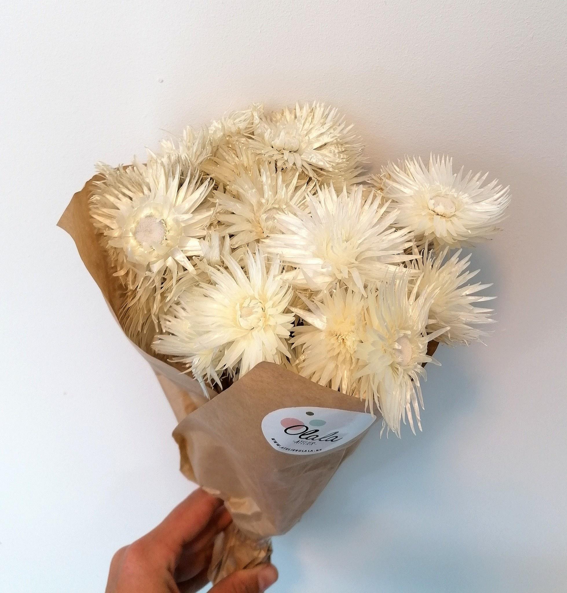 Droogboeket Kaapse Bloemen Wit-1