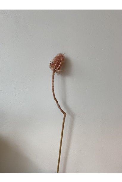Distel Roze