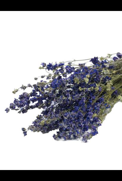 Bussel Delphinium Blauw/ Paars