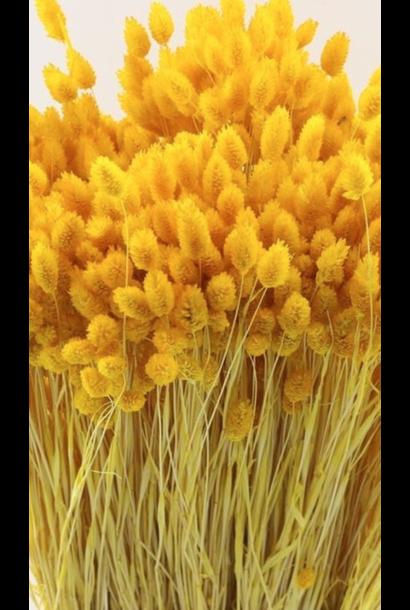 Bouquet Phalaris - Yellow