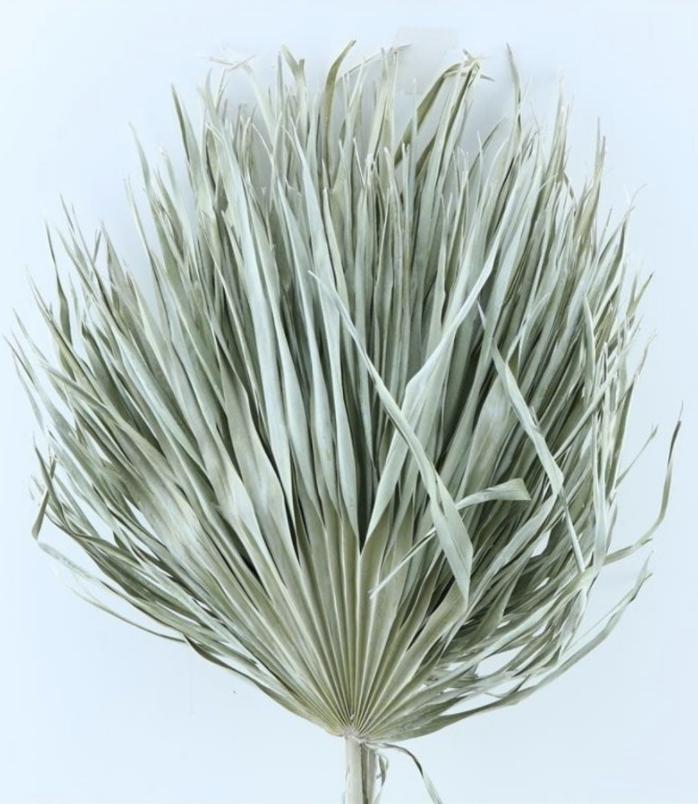 Gedroogd Palmblad Naturel-1
