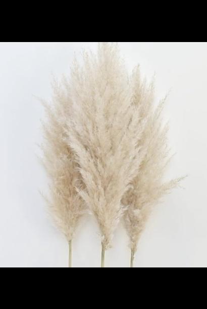 Flowerbar - Pampas Naturel