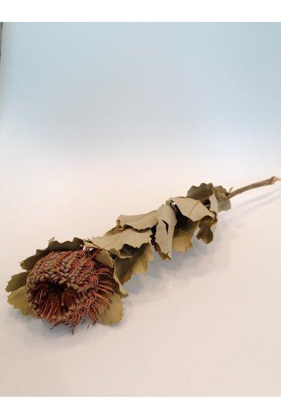 Flowerbar - Banksia Coccinea