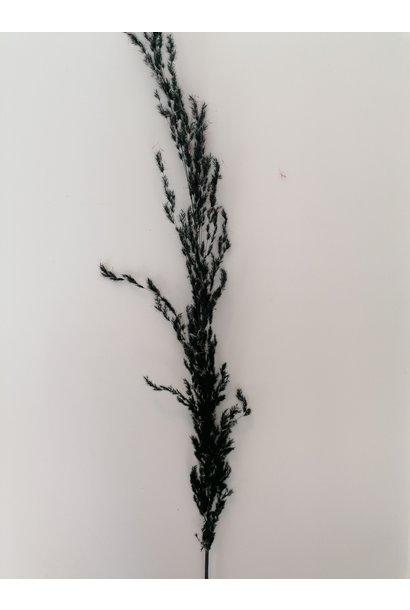 Flowerbar - Pampas Zwart Klein