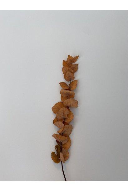 Eucalyptus Tak Klein Herfst