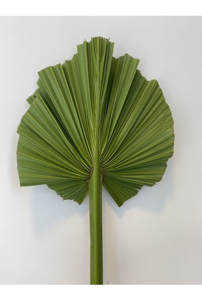 Gedroogd Palmblad Kort