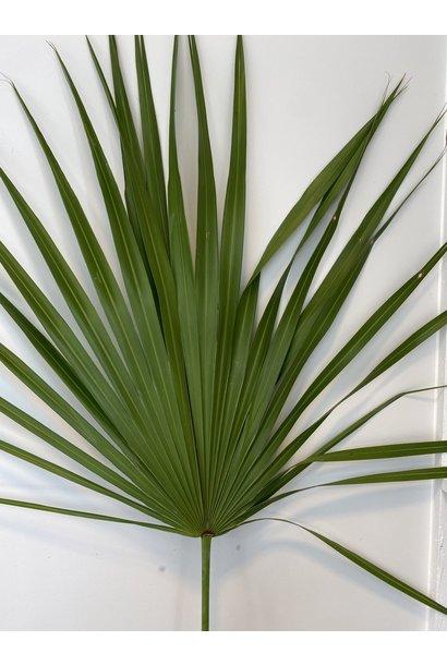 Gedroogd Palmblad