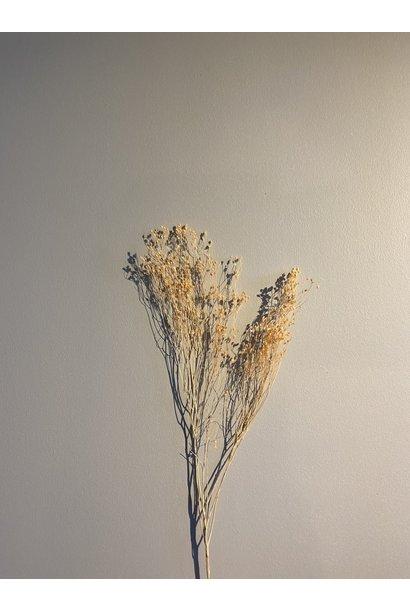 Broom Zalmroze