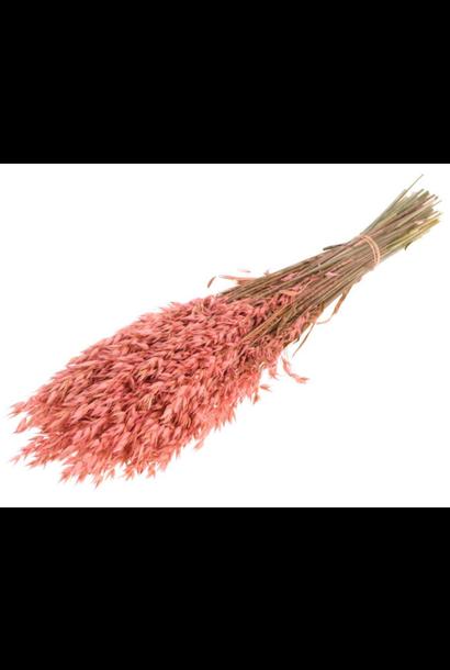 Bunch Oat Salmon Pink