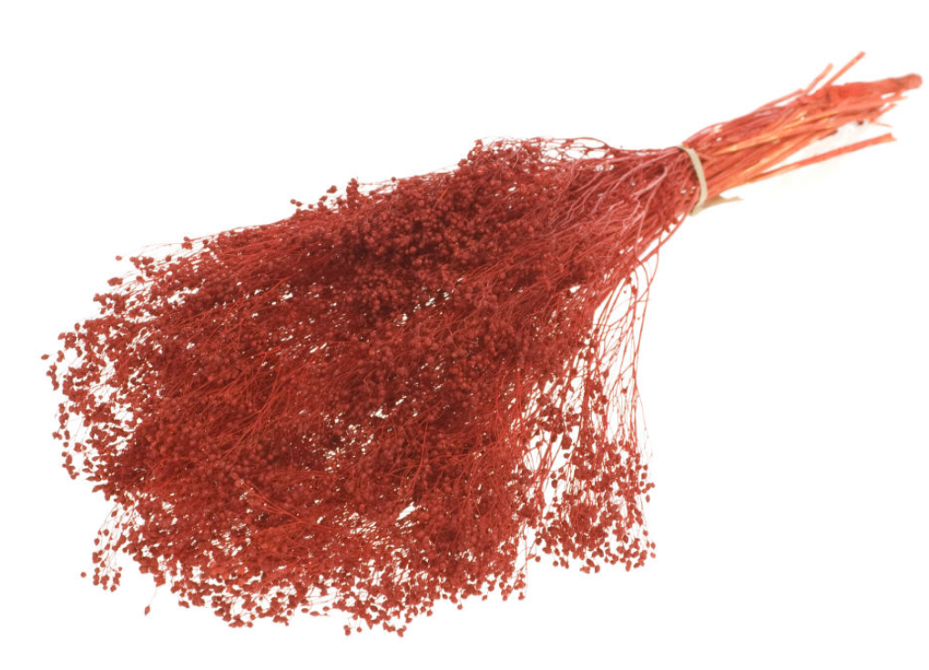Broom Terracotta-2