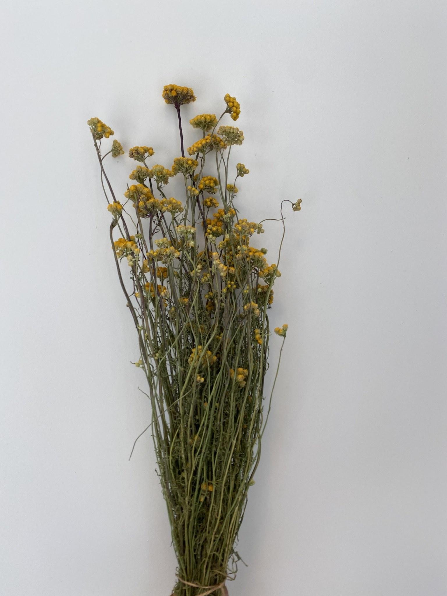 Bussel Kerrieplant-1