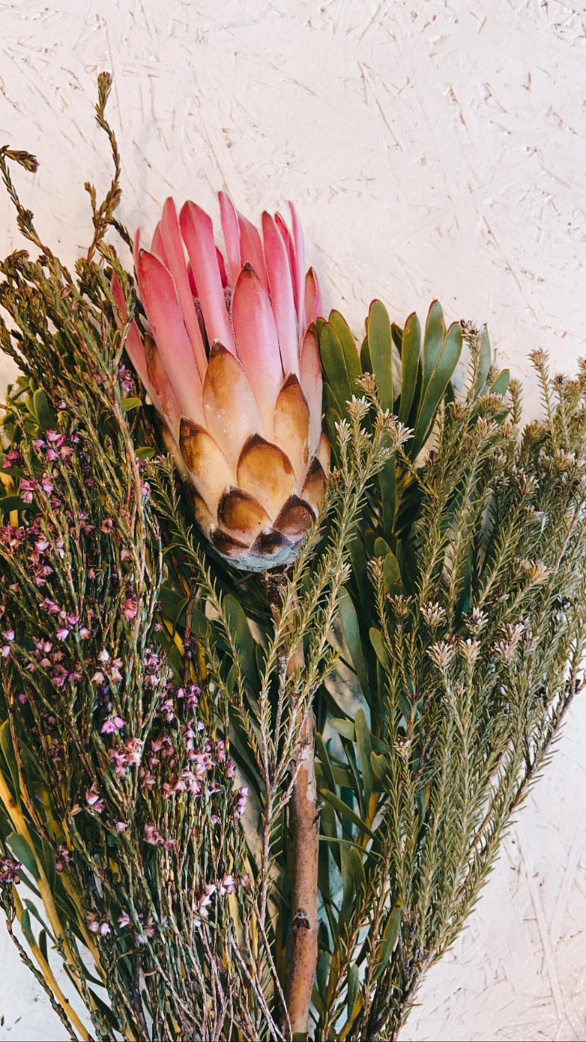 Kaapsgroen met Protea-1