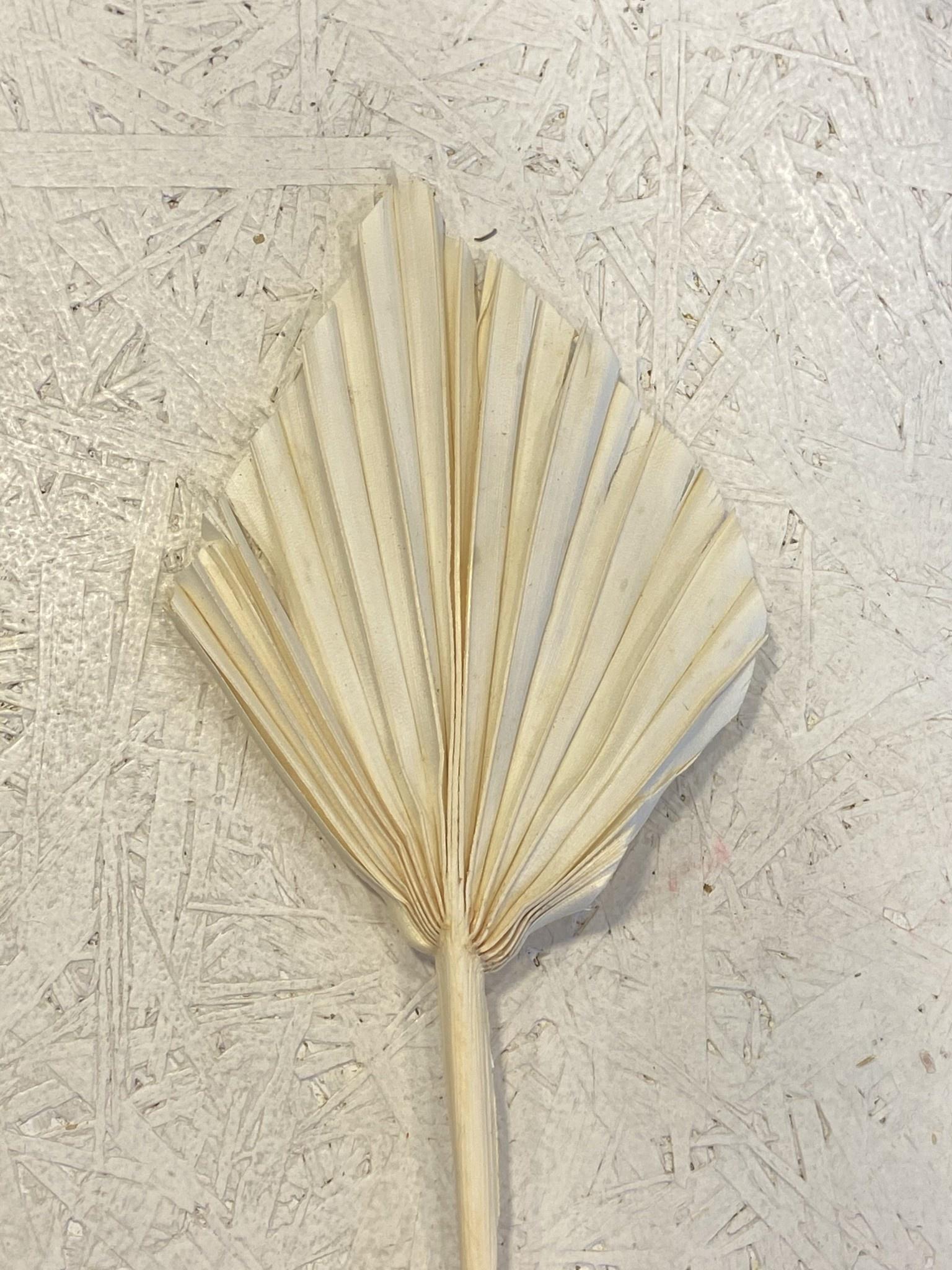 Palmspeer crème mini-1