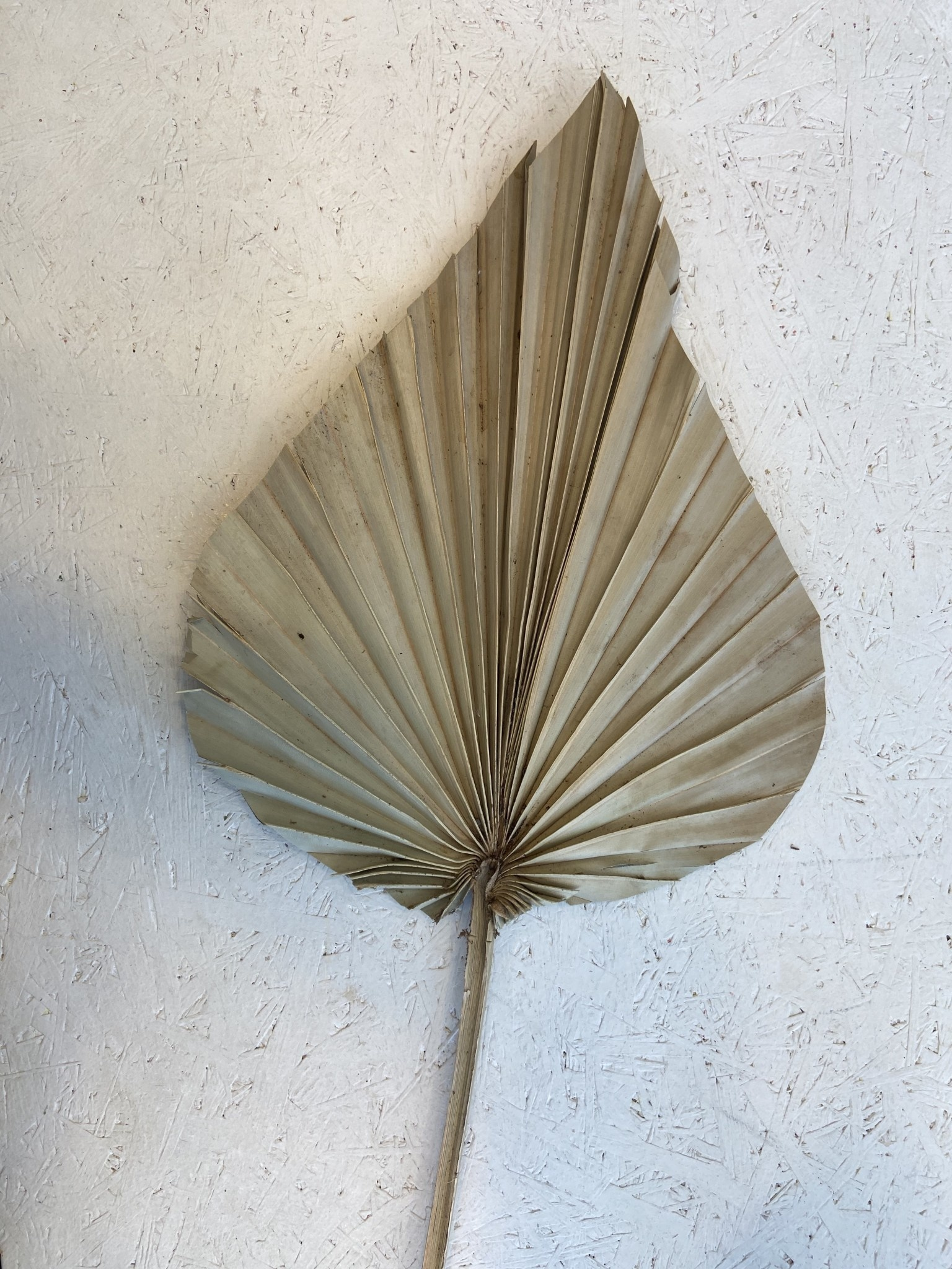 Palmspeer naturel mini-1