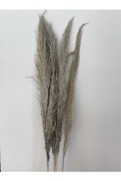 Flowerbar - Pampas Zilver