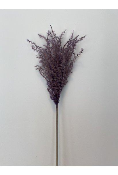 Flowerbar - Miscantus Paars